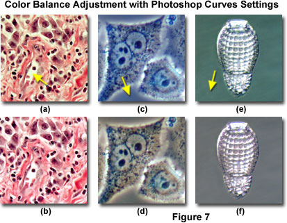 www_microsystemy_ru_articles_Color_Balance_in_Digital_Imaging