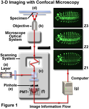 www_microsystemy_ru_articles_Critical_Aspects_of_Confocal_Microscopy