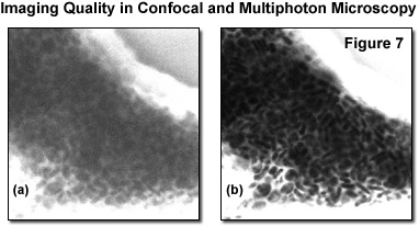 www_microsystemy_ru_articles_Fundamentals_and_Applications_in_Multiphoton_Excitation_Microscopy_Part_2
